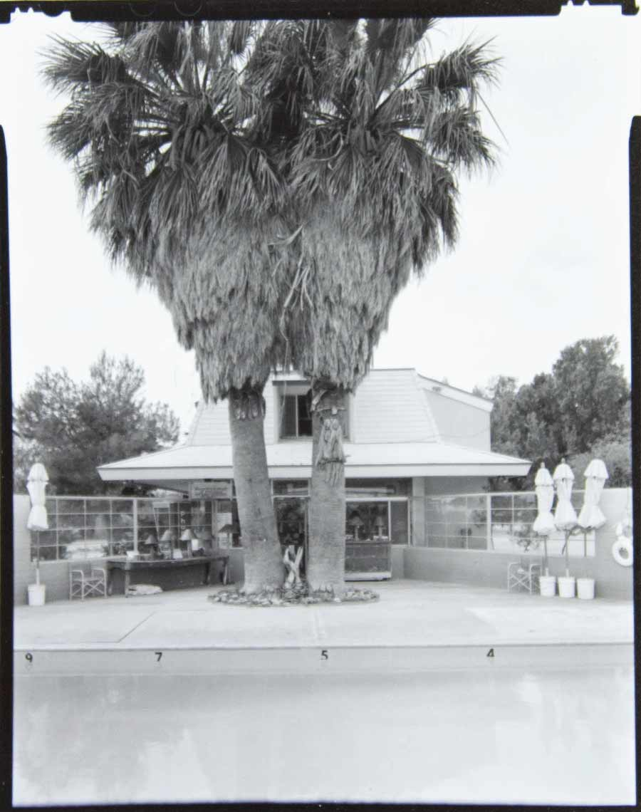 A black-and-white photograph of the two palm trees next to the pool, c 1939